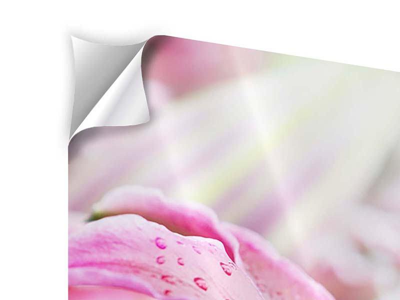 Panorama Klebeposter 3-teilig Lilien im Tau