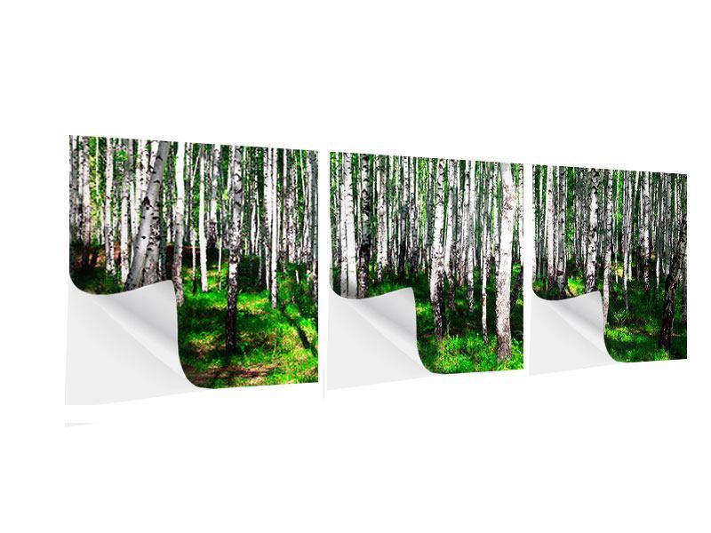 Panorama Klebeposter 3-teilig Sommerlicher Birkenwald