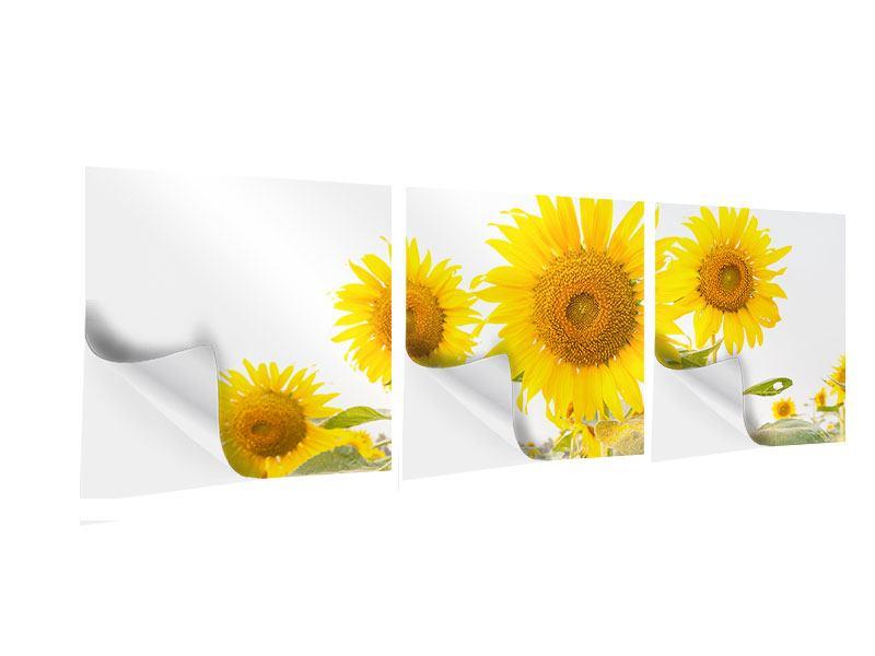 Panorama Klebeposter 3-teilig Das Sonnenblumenfeld