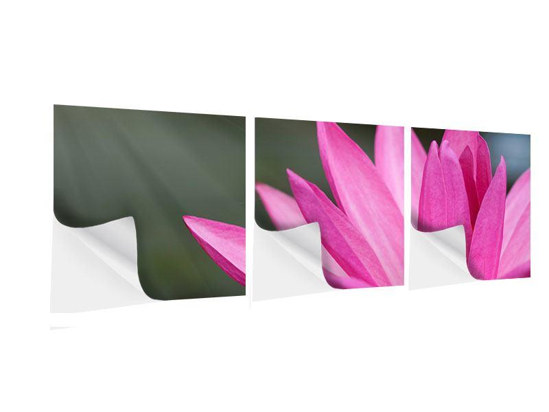 Panorama Klebeposter 3-teilig XXL Seerose in Pink