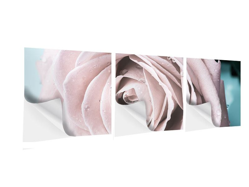 Panorama Klebeposter 3-teilig Pastellrose