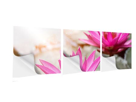 Panorama Klebeposter 3-teilig Lotus-Duo