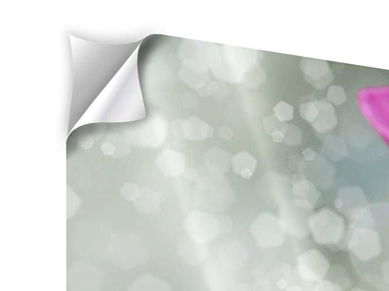 Panorama Klebeposter 3-teilig Libelle auf dem Seerosenblatt