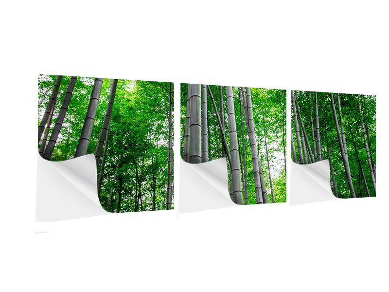 Panorama Klebeposter 3-teilig Bambuswald