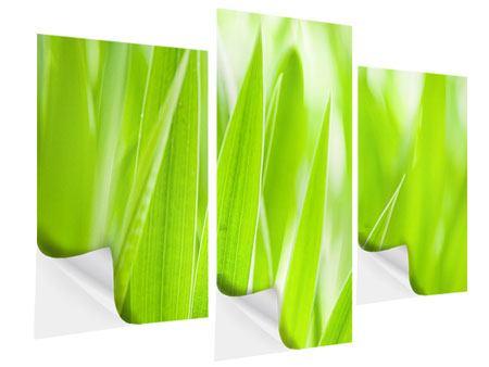 Klebeposter 3-teilig modern Gras XXL