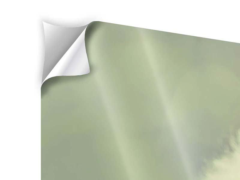 Klebeposter 3-teilig modern Die Pusteblume