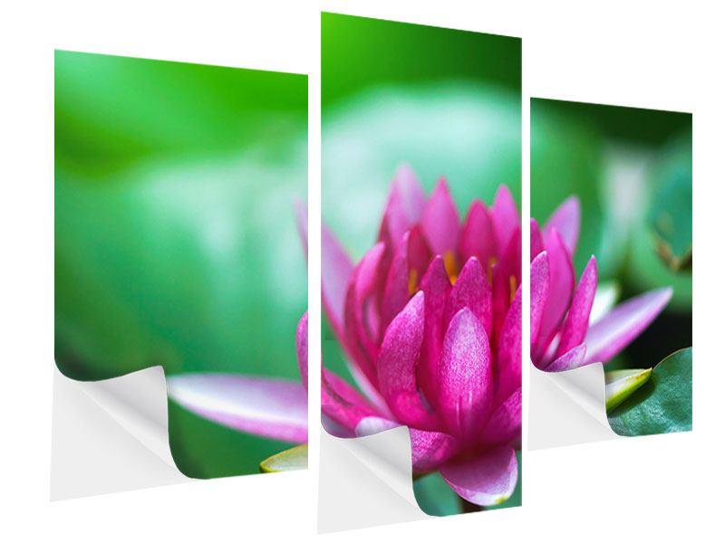 Klebeposter 3-teilig modern Lotus in Pink