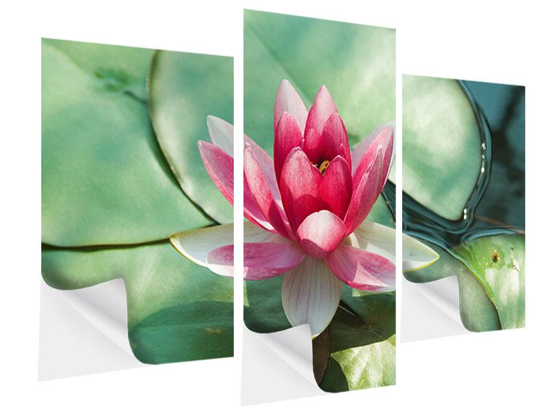 Klebeposter 3-teilig modern Der Frosch und das Lotusblatt