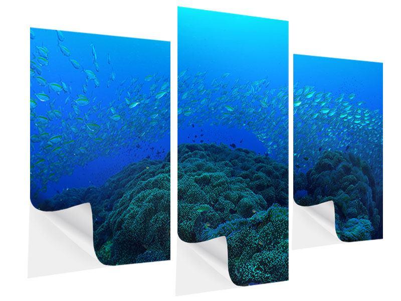 Klebeposter 3-teilig modern Fischschwärme
