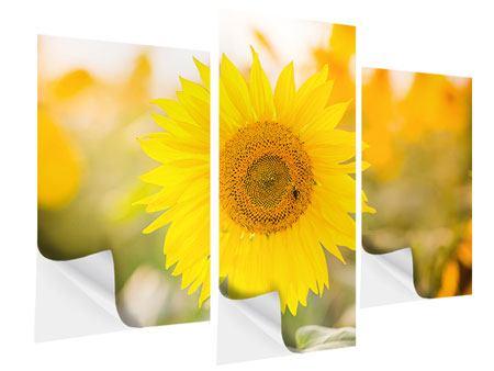 Klebeposter 3-teilig modern Sunflower