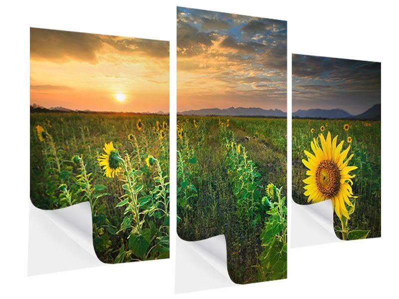 Klebeposter 3-teilig modern Sonnenblumenfeld im Abendrot