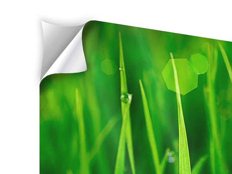 Klebeposter 3-teilig modern Gras mit Morgentau