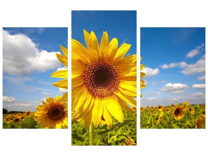 Klebeposter 3-teilig modern Das Feld der Sonnenblumen