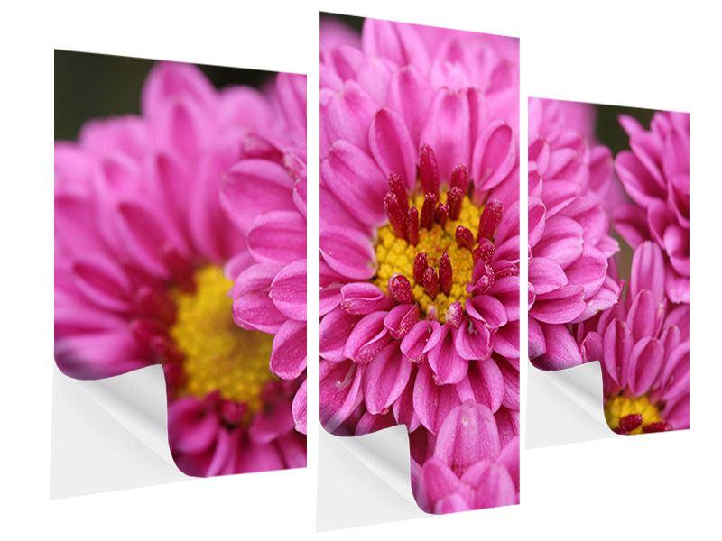 Klebeposter 3-teilig modern Chrysanthemen