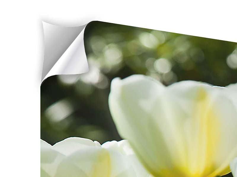 Klebeposter 3-teilig modern Tulpen bei Sonnenuntergang