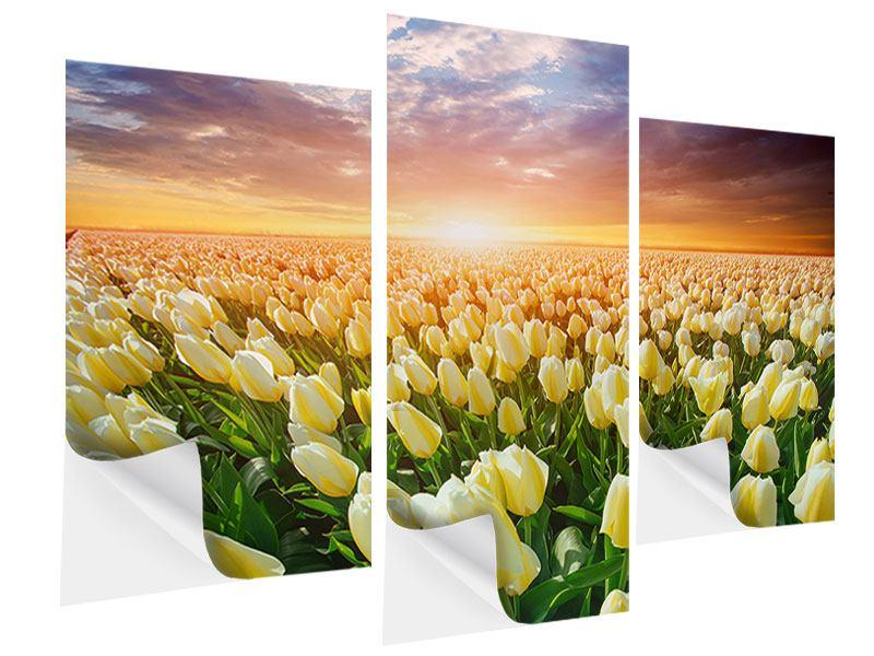 Klebeposter 3-teilig modern Sonnenaufgang bei den Tulpen