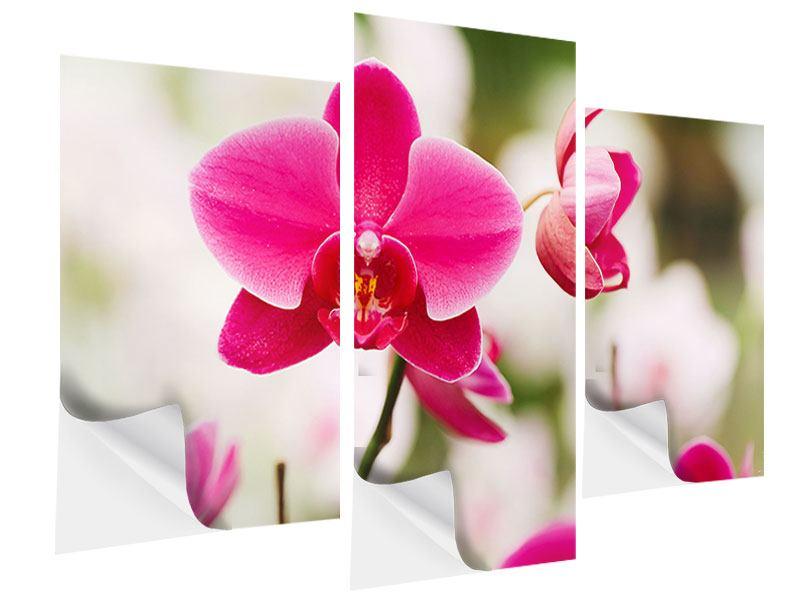 Klebeposter 3-teilig modern Perspektivische Orchideen