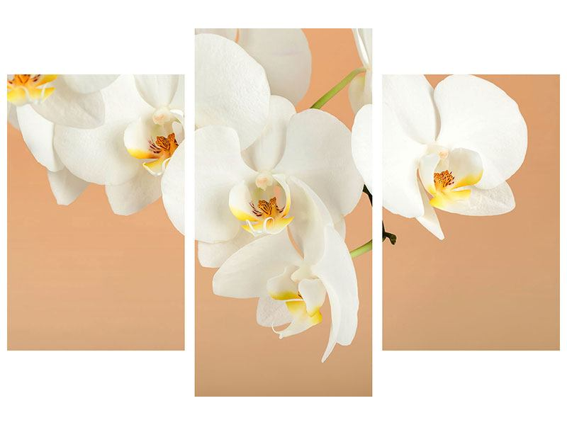 Klebeposter 3-teilig modern Weisse Orchideenblüten