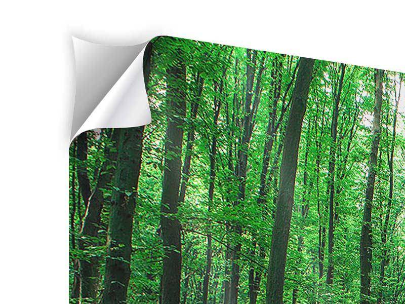 Klebeposter 3-teilig modern Tannenwald