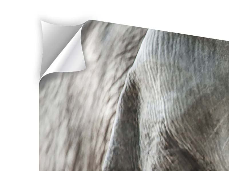 Klebeposter 3-teilig modern Close Up Elefant