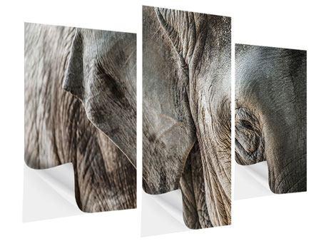 Klebeposter 3-teilig modern Close Up Elefant