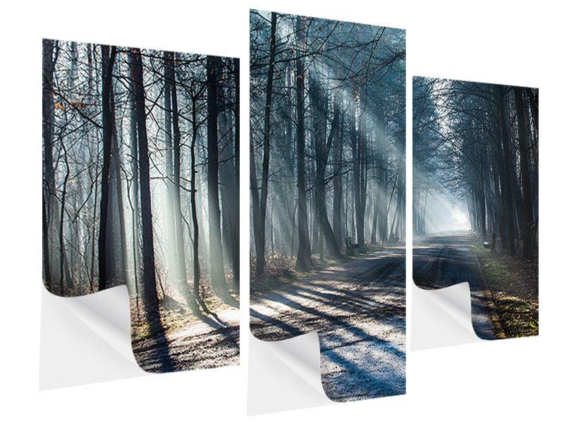 Klebeposter 3-teilig modern Wald im Lichtstrahl