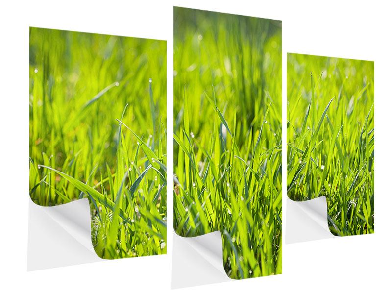 Klebeposter 3-teilig modern Gras im Morgentau