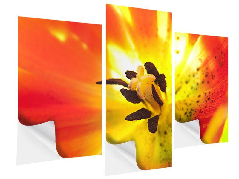 Klebeposter 3-teilig modern Die Narbe einer Tulpe XXL