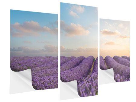 Klebeposter 3-teilig modern Das blühende Lavendelfeld