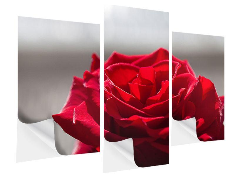 Klebeposter 3-teilig modern Rote Rosenblüte