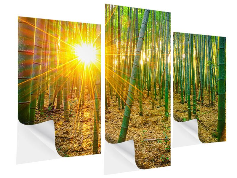 Klebeposter 3-teilig modern Bambusse
