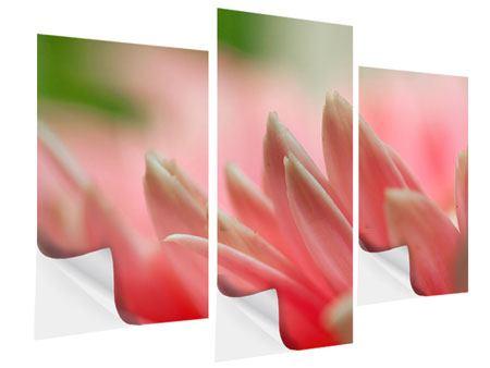 Klebeposter 3-teilig modern Close Up einer Blüte