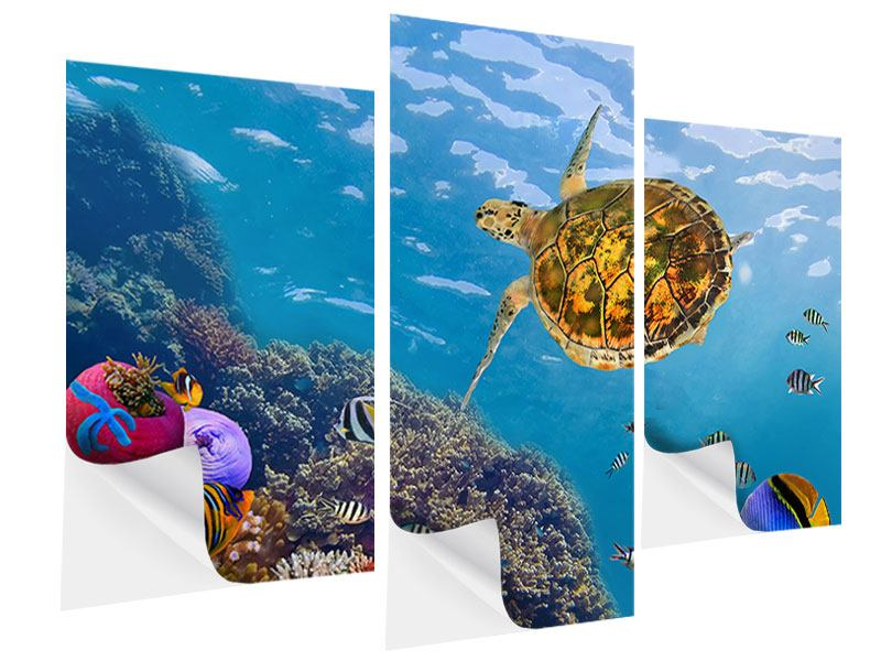 Klebeposter 3-teilig modern Die Wasserschildkröte