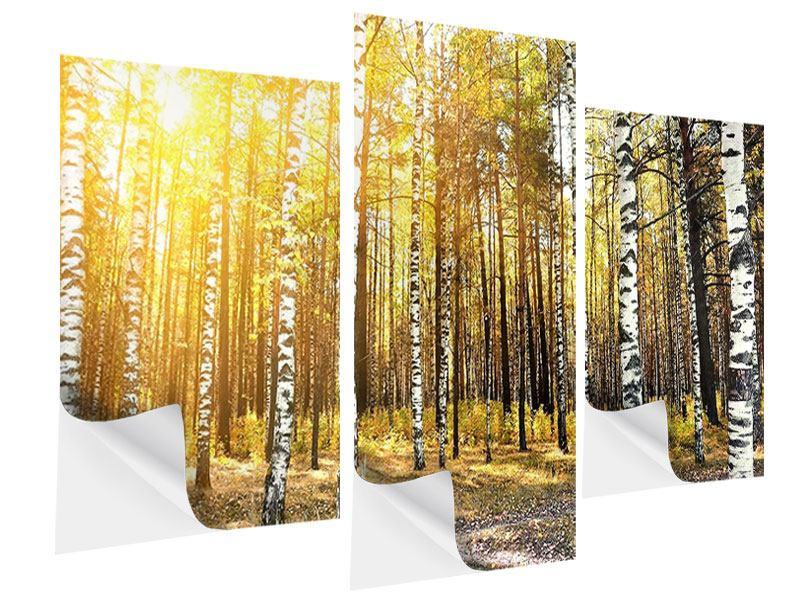Klebeposter 3-teilig modern Birkenwald