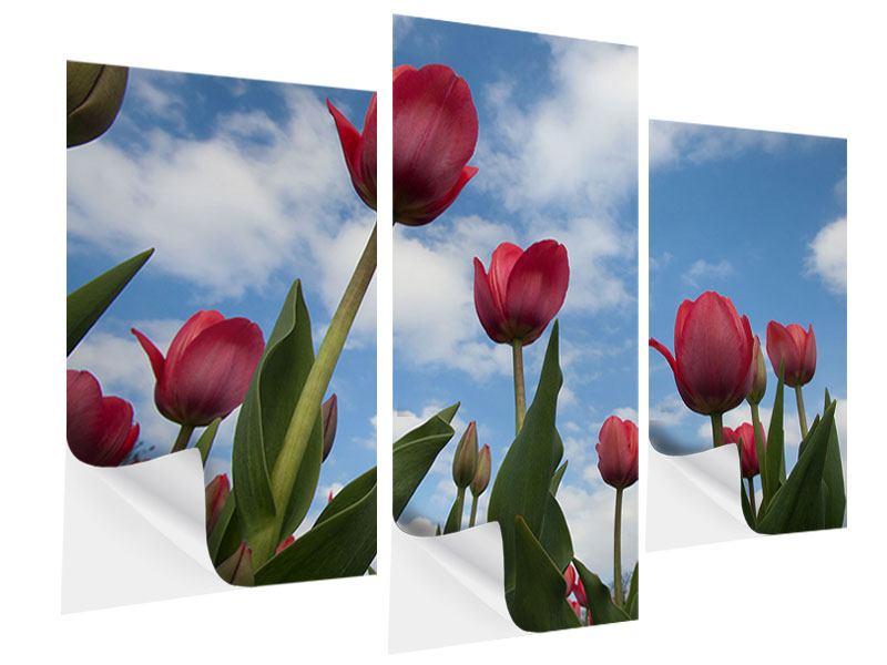 Klebeposter 3-teilig modern Tulpen im Himmel