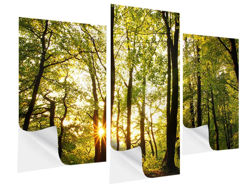 Klebeposter 3-teilig modern Sonnenuntergang zwischen den Bäumen