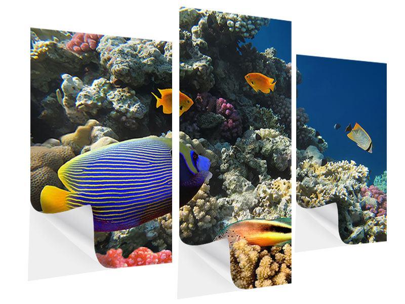 Klebeposter 3-teilig modern Das Aquarium