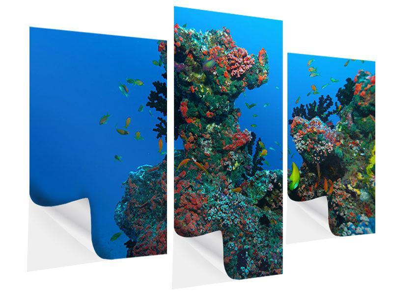 Klebeposter 3-teilig modern Die Welt der Fische