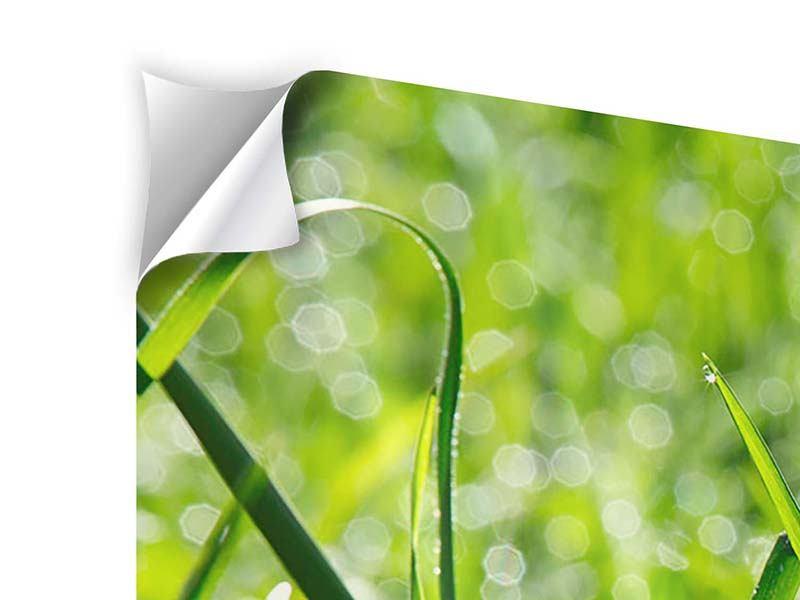 Klebeposter 3-teilig modern Sonniges Gras