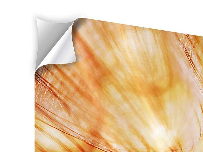 Klebeposter 3-teilig modern Close Up Pusteblume im Licht