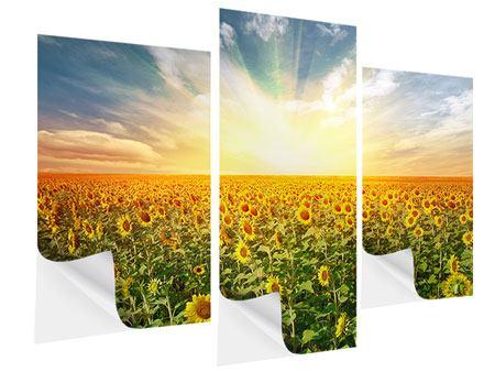 Klebeposter 3-teilig modern Ein Feld voller Sonnenblumen