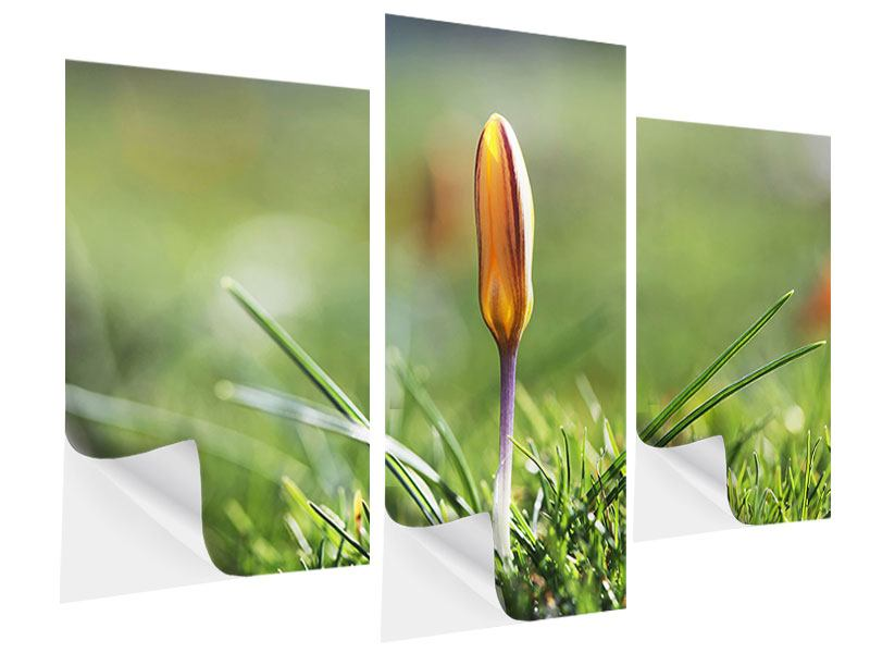 Klebeposter 3-teilig modern Die Blütenknospe