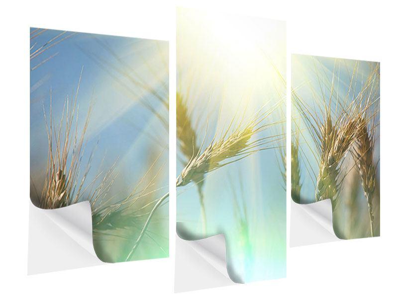 Klebeposter 3-teilig modern König des Getreides