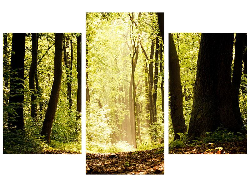 Klebeposter 3-teilig modern Sonnenaufgang im Wald