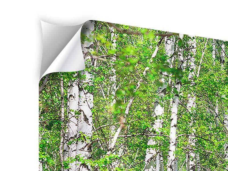 Klebeposter 3-teilig modern Der Birkenwald