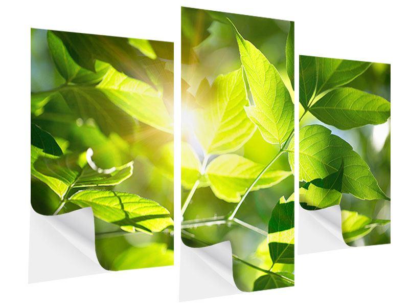 Klebeposter 3-teilig modern Es grünt so grün