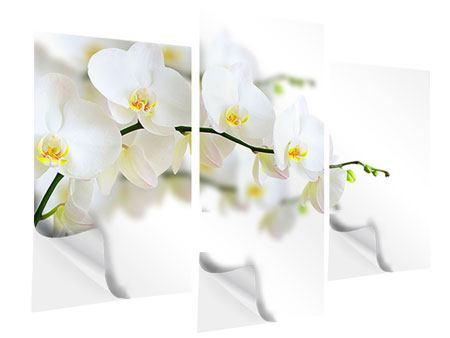 Klebeposter 3-teilig modern Weisse Orchideen