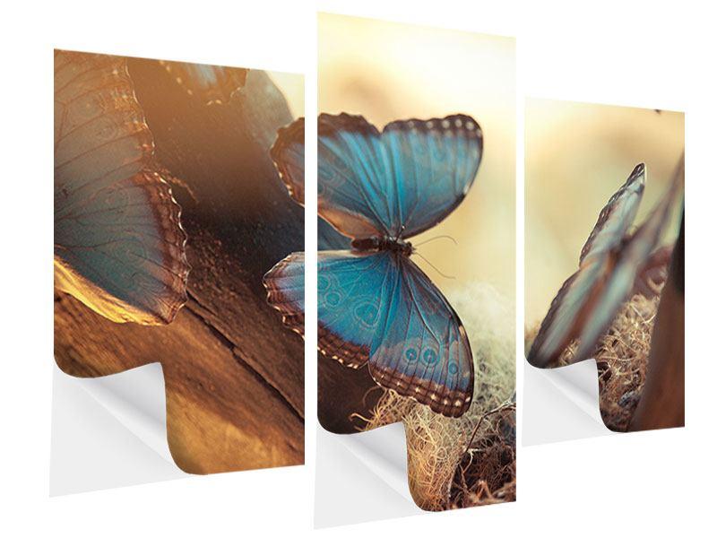 Klebeposter 3-teilig modern Schmetterlinge