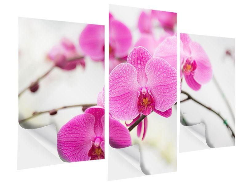 Klebeposter 3-teilig modern Das Symbol der Orchidee