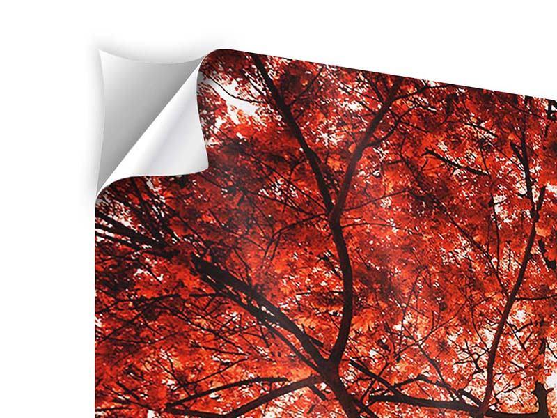 Klebeposter 3-teilig modern Herbstlicht